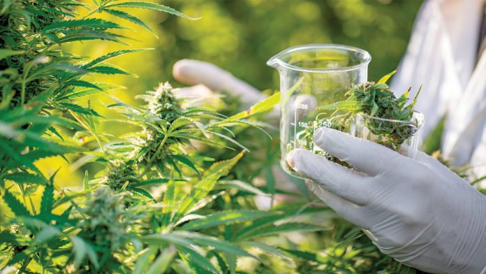 Amateurs CBD Oil Shop However Ignore A Couple Of Easy Issues